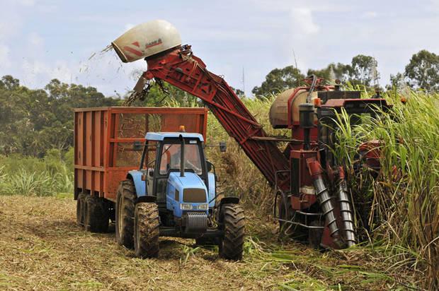 Récolte cannière : la sucrerie de Grande-Anse confrontée à une panne