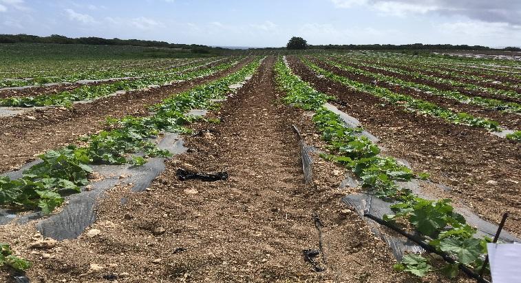 Agriculture : des alternatives pour réduire les déchets plastiques
