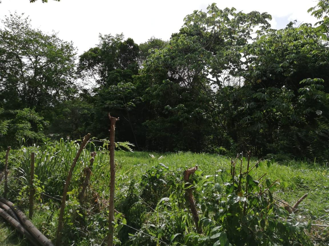 À Rivière-Salée, des agriculteurs travaillent sans eau ni électricité sur des terrains de la CTM