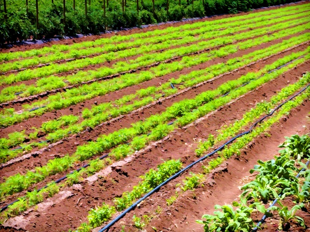 COVID-19 : quel impact  sur l'agriculture et le système alimentaire ?