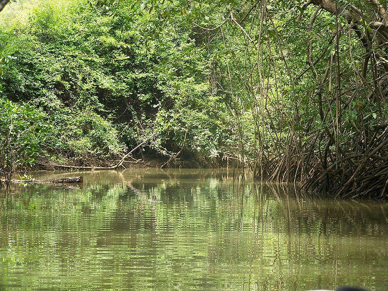 Biodiversité : des centaines d'espèces menacées en Outre-mer