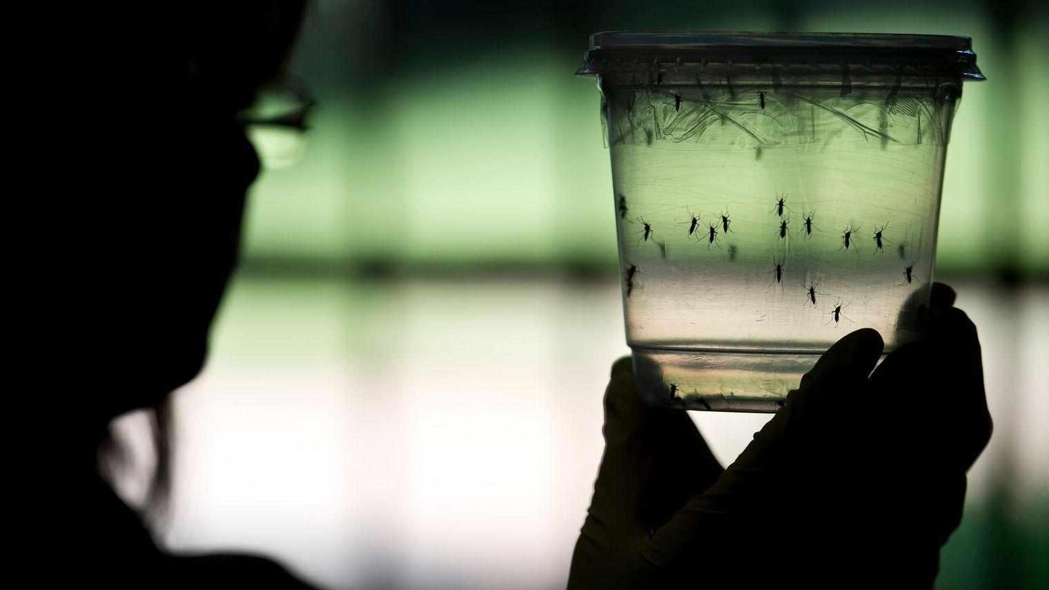 Dengue : des indicateurs stables mais supérieurs au seuil saisonnier