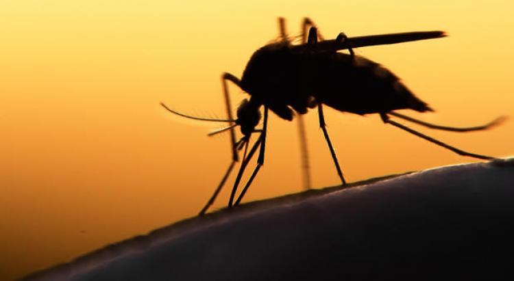 Dengue: l'épidémie progresse en Guadeloupe