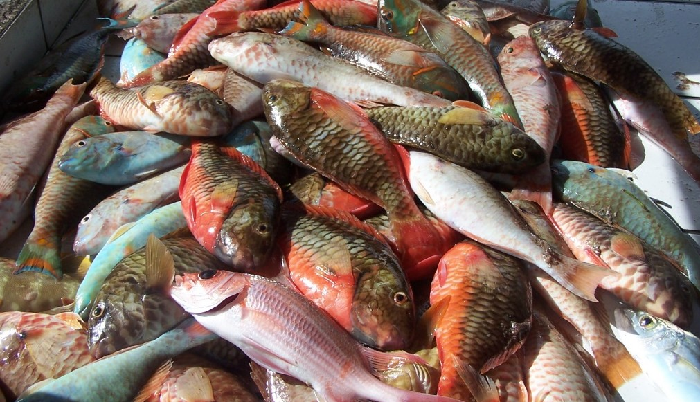 L'IFREMER recherche des volontaires pour une large étude sur la pêche de loisirs aux Antilles
