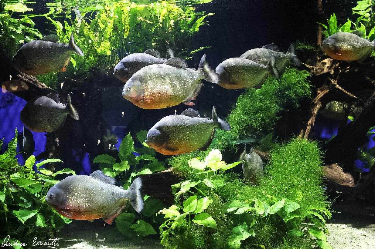 Toutes les astuces pour se lancer dans l'aquariophilie