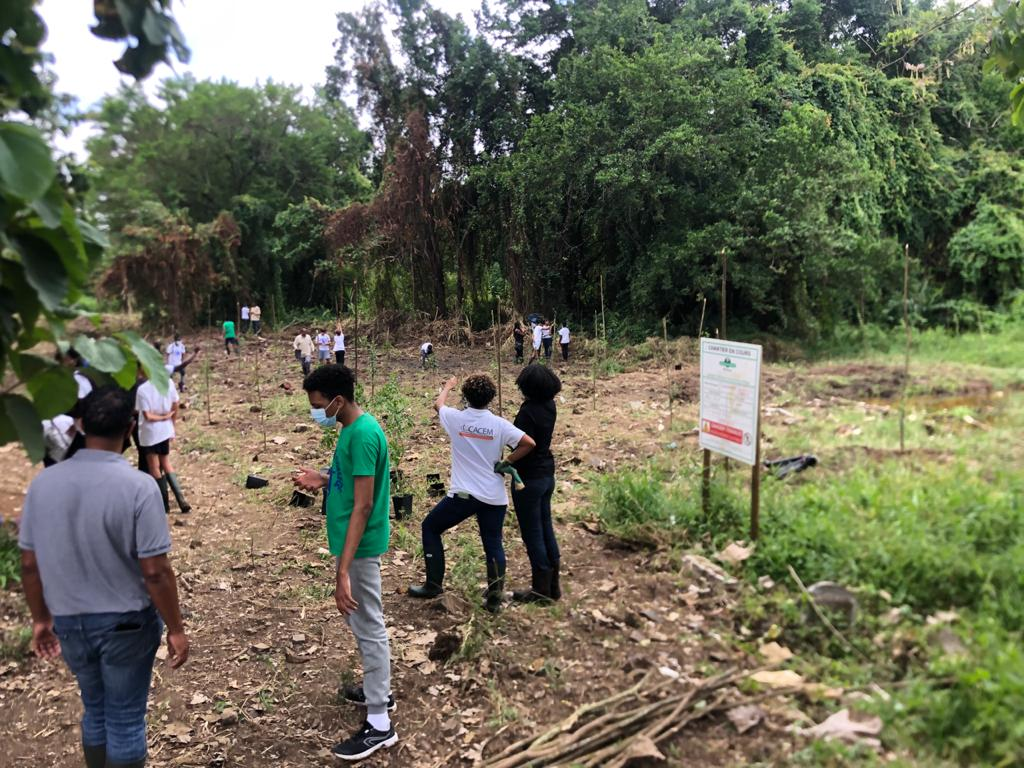 Une opération de reboisement de la mangrove à la zone industrielle des Mangles