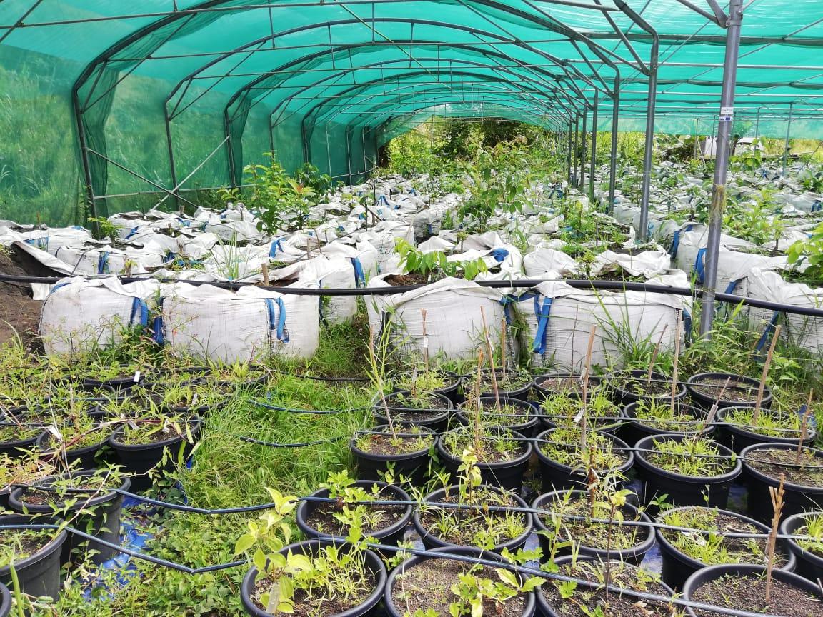 Le génie des plantes pour lutter contre l'érosion et le risque d'inondation