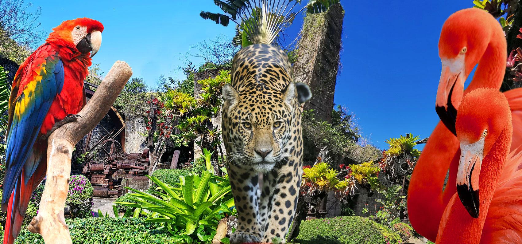 Le zoo de Martinique rouvre ses portes pour les vacances de Pâques