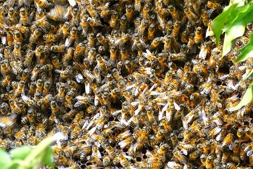 Attaque d'abeilles sur le chantier du futur CHU aux Abymes