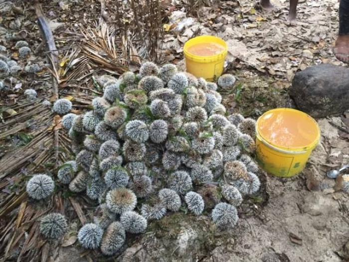 16 kilos d'oursins saisis et deux braconniers arrêtés