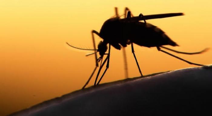 5 cas de dengue confirmés en Martinique depuis début février