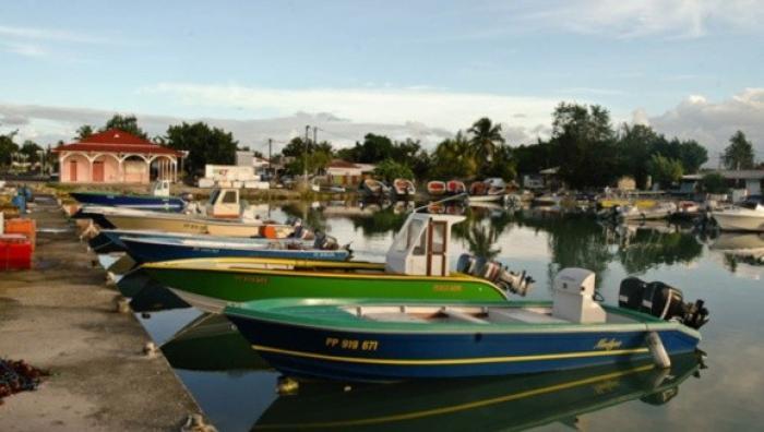 Chlordécone : Les marins-pêcheurs accusent l'Etat de noyer le poisson