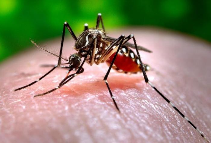 Dengue : l'agence caribéenne de santé publique redoute une nouvelle épidémie