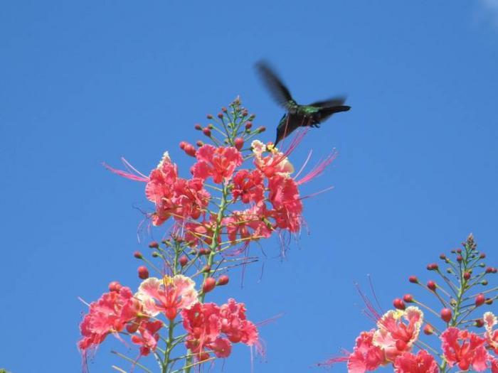 Et si la Martinique devenait une réserve de biosphère UNESCO ?