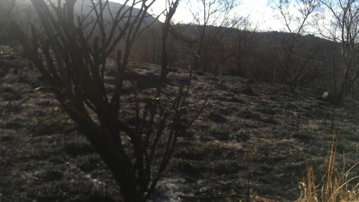 Incendie au Carbet : le phénomène est sous contrôle