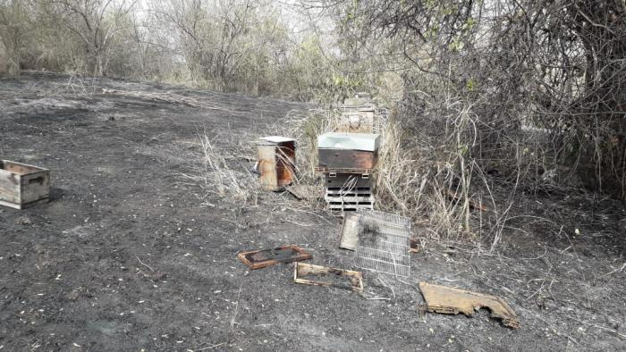 Incendie à Sainte-Luce : une centaine de ruches détruite par les flammes