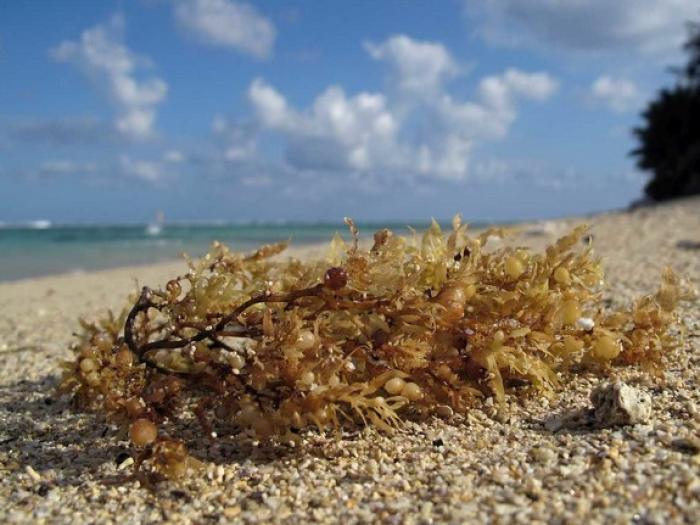 Insertion professionnelle et plages sans sargasse