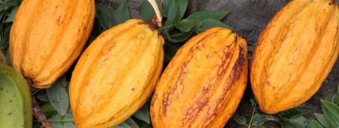 Intervention émouvante et réponse technique autour de la filière cacao
