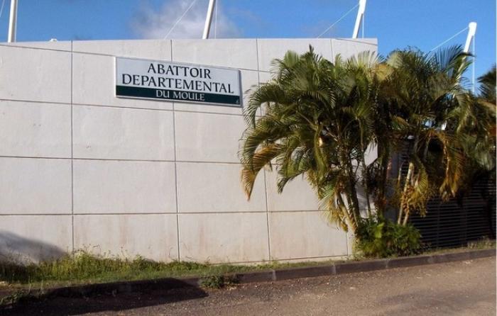 L'abattoir départemental bloqué par le Groupement de Défense Sanitaire