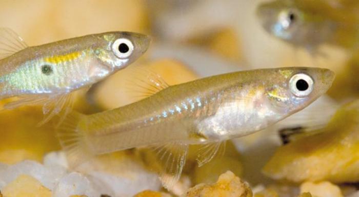 L'aquaponie : des déjections de poissons pour nourrir les plantes