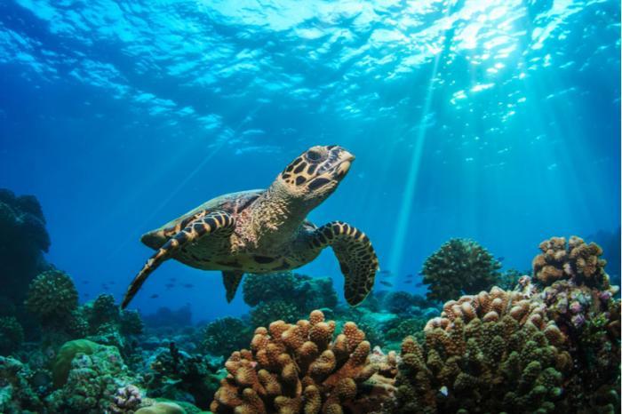 L'aquarium blanchi pour la détention de tortues marines