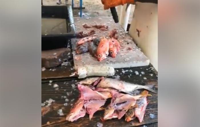 La fête du poisson à Tartane bat son plein