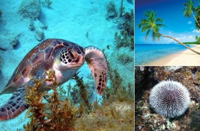 Le Parc Naturel Marin de Martinique voit le jour par décret