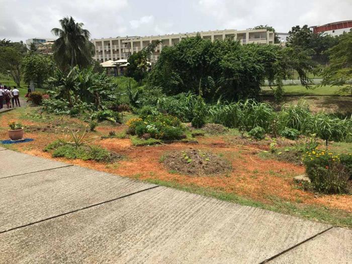 Les élèves de Segpa du collège Perrinon assurent en horticulture