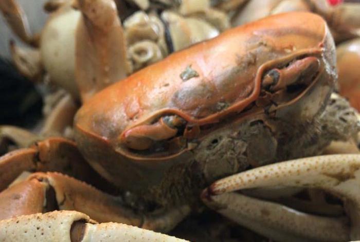 À la Pentecôte comme à Pâques, les crabes sont les stars