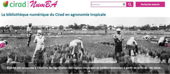 Numba, la bibliothèque numérique en agronomie tropicale