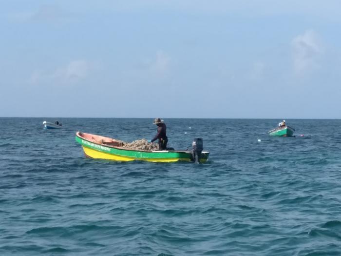 Pêche aux oursins : les pêcheurs satisfaits, des braconniers mis en fuite