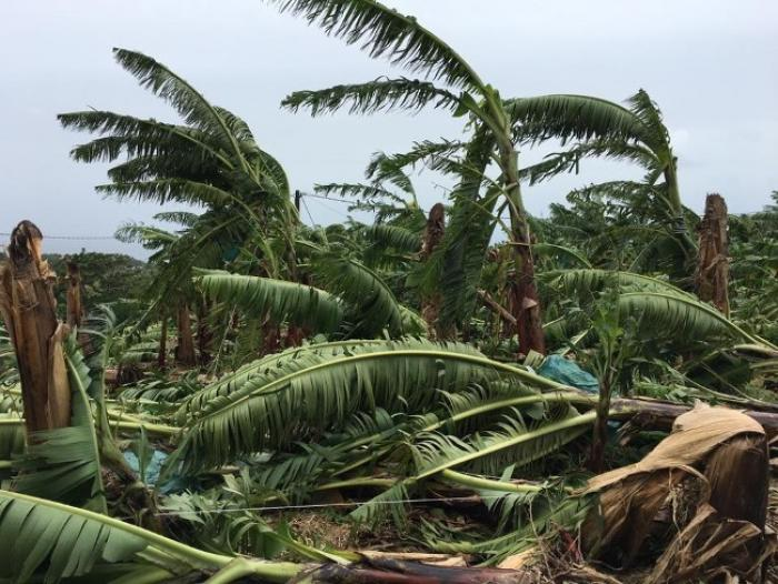 Près de 8 millions d'euros en faveur des agriculteurs victimes de Matthew