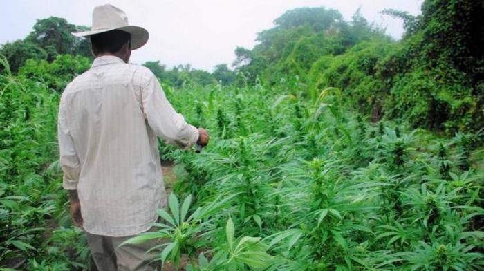 Suspecté de trafic de cocaïne, il tombe pour du cannabis