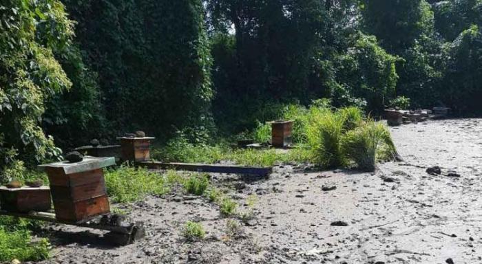 Victimes des pluies, les apiculteurs seront indemnisés