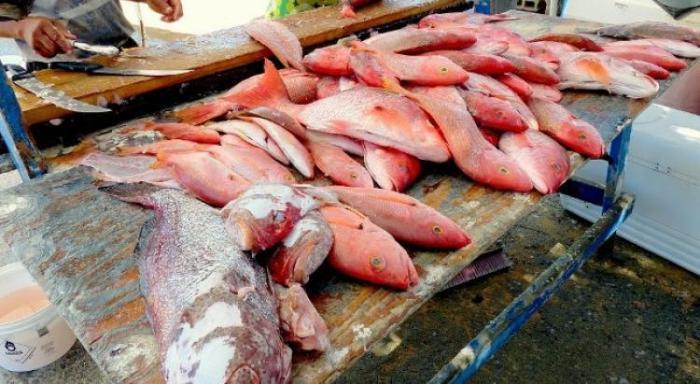 Zones interdites à la pêche : le directeur de la mer s'exprime